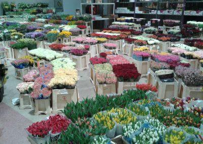 Beaucoup de fleurs à Rungis